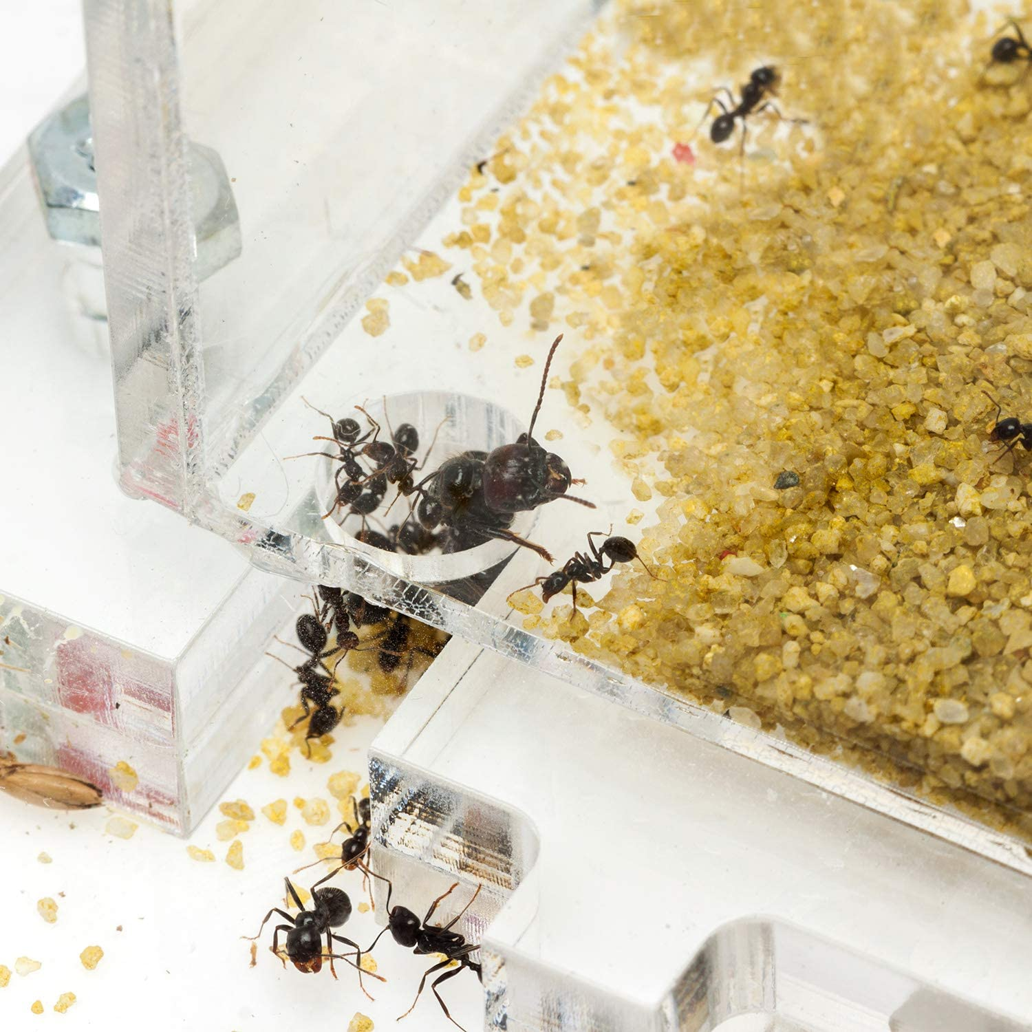 AntHouse Forage Zone and Plaster Layer Free Ants Included Acrylic Ant Hill 20x15x1,5 cm Foam Moisture System