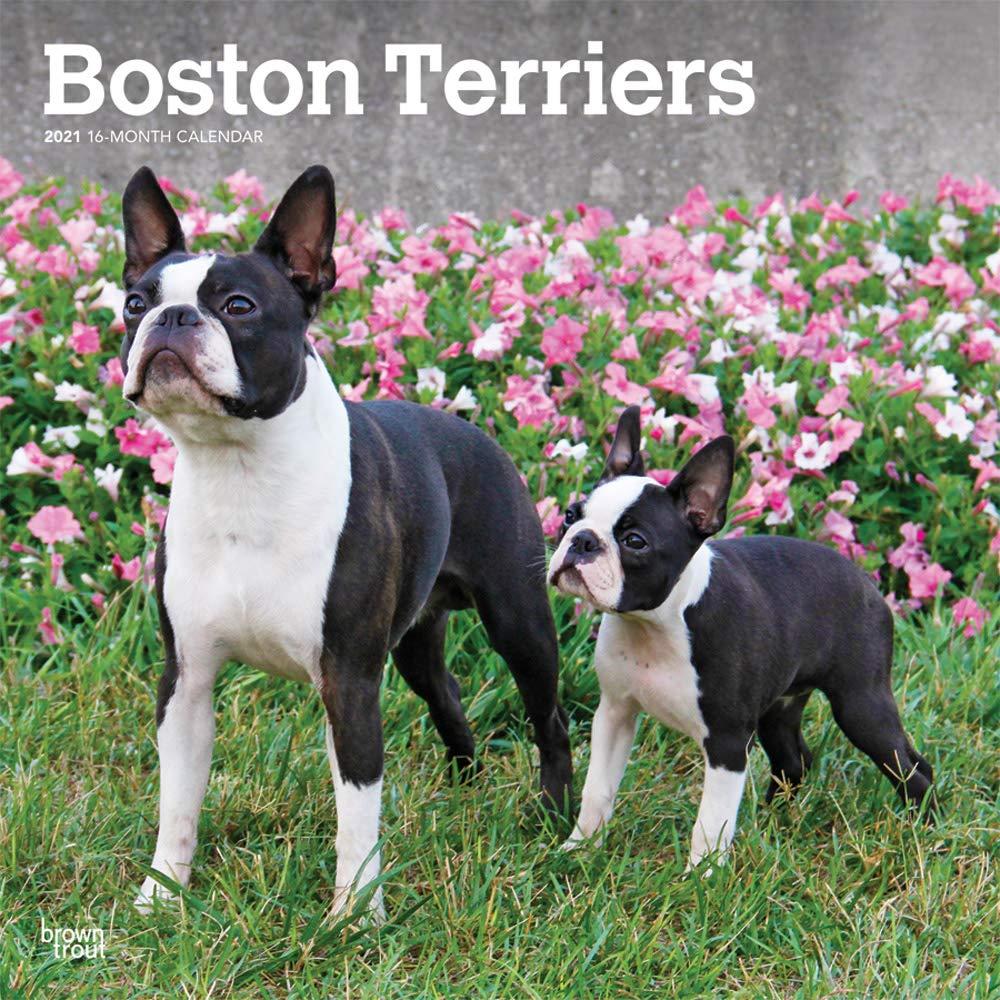 Boston Calendar July 2021 Images