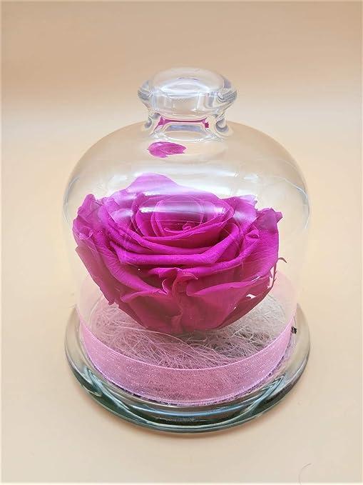 Rosa preservada Fucsia. Gratis TU ENVÍO. Rosa eterna Fucsia cúpula de Cristal. Hecho en España.: Amazon.es: Hogar