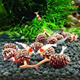 Crystal Red Shrimp Treats -- Organic food to supplement shrimp diet - Lower pH to detoxify ammonia - Improve well-being and appetite by food rotation
