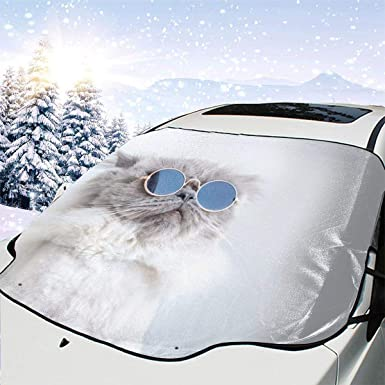 Divertido gato posando en gafas de sol para coche, nieve, heladas ...