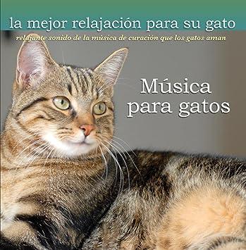 Musica de relajacion para mascotas - Musica para gatos -Relajante sonido de la musica de curacion que los gatos aman - Amazon.com Music