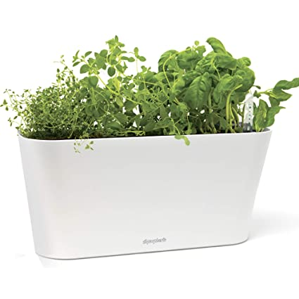Aquaphoric Herb Garden Tub Self Watering Passive Hydroponic Planter Fiber Soil Keeps Indoor Kitchen Herbs Fresh And Growing For Weeks On Your