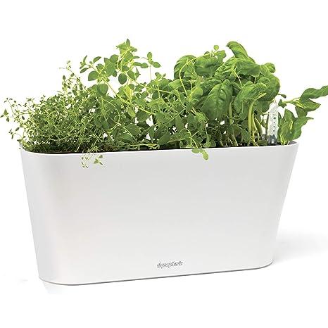 Amazon Com Aquaphoric Herb Garden Tub Self Watering Passive