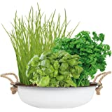 Urban City Garden   Grow Your Own Herbs | Easy To Grow Basil, Parsley And