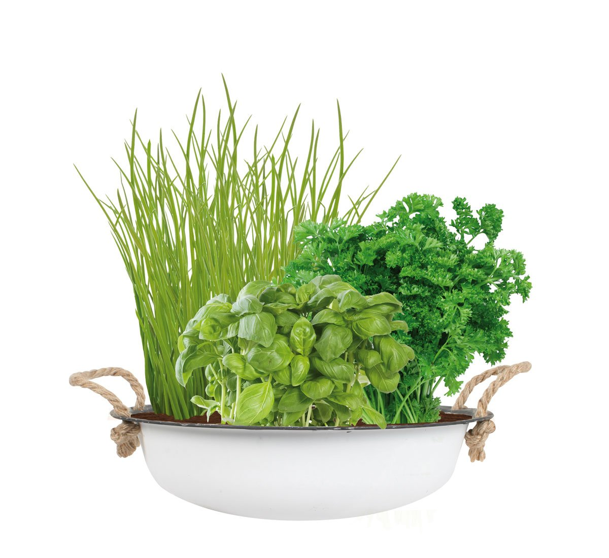 TotalGreen Holland Urban City Herb Garden | Grow Your Own Herbs | Easy to Grow Basil, Parsley and Chives That are Guaranteed to Grow | Unique Germination Kit for in- & Outdoor | Exclusively