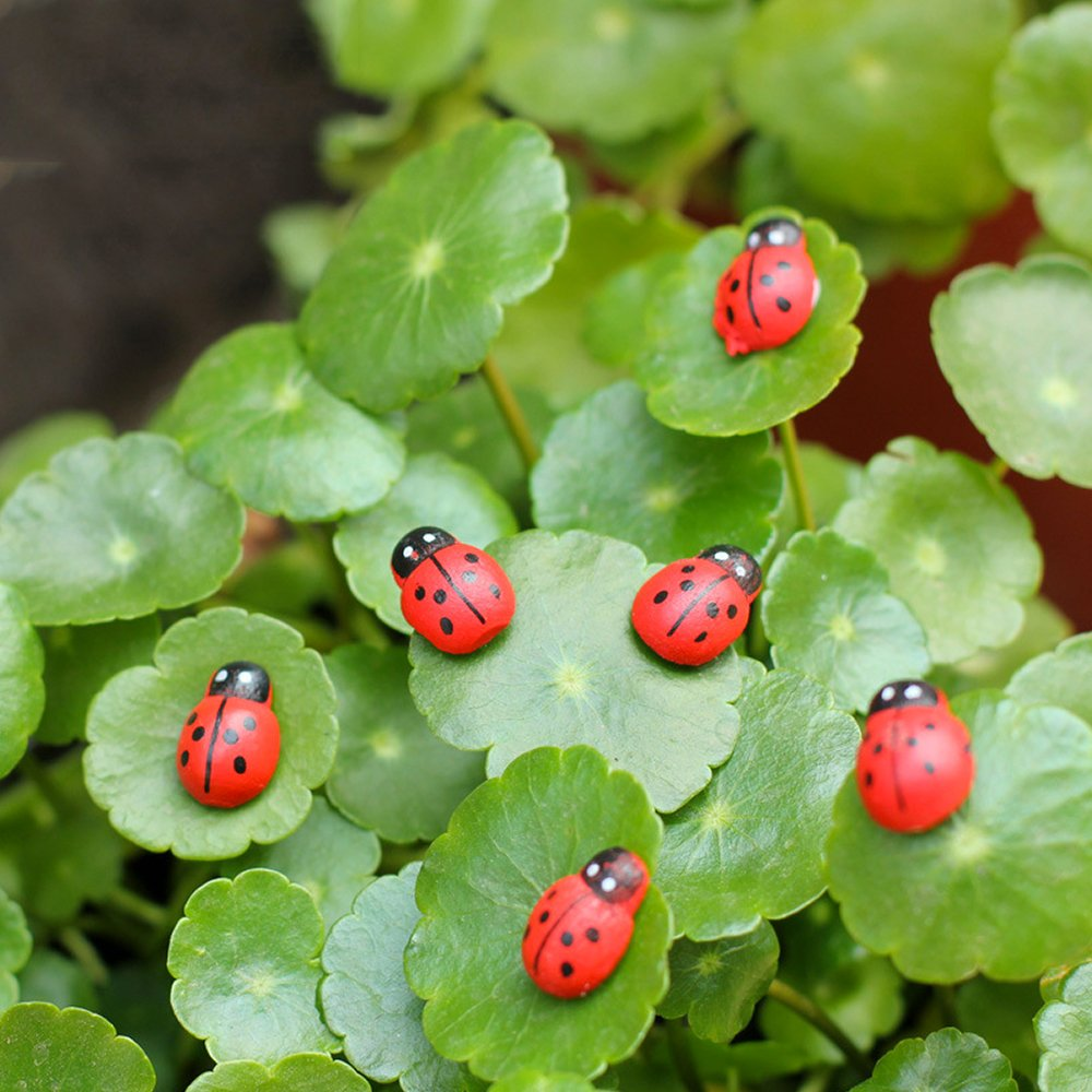 DEKOWEAR Ladybirds with glue point 100 pieces for Decorating from Wood, Red or Colored, 11 mm as Luck Beetle - Handmade Lucky Charm Ladybug (Colored)