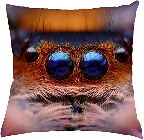 Amazon Com Spider Throw Pillow Case Blue Eyes Jumping Spider Home Decorative Throw Pillow Cover Peach Skin Pillow Case 20 X20 Home Kitchen