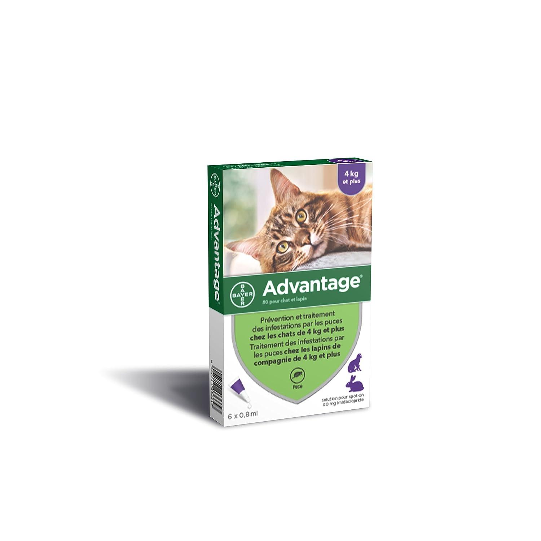 ADVANTAGE 80 - 6 pipettes antiparasitaires - Pour chat et lapin de 4kg et plus: Amazon.es: Productos para mascotas
