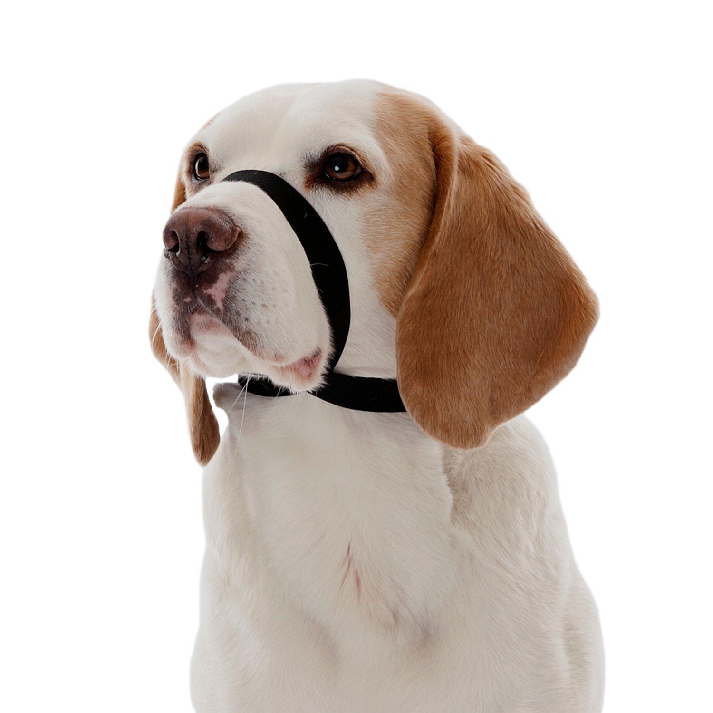 The Company of Animals Quiet Dog for Training Dogs, Black, Medium
