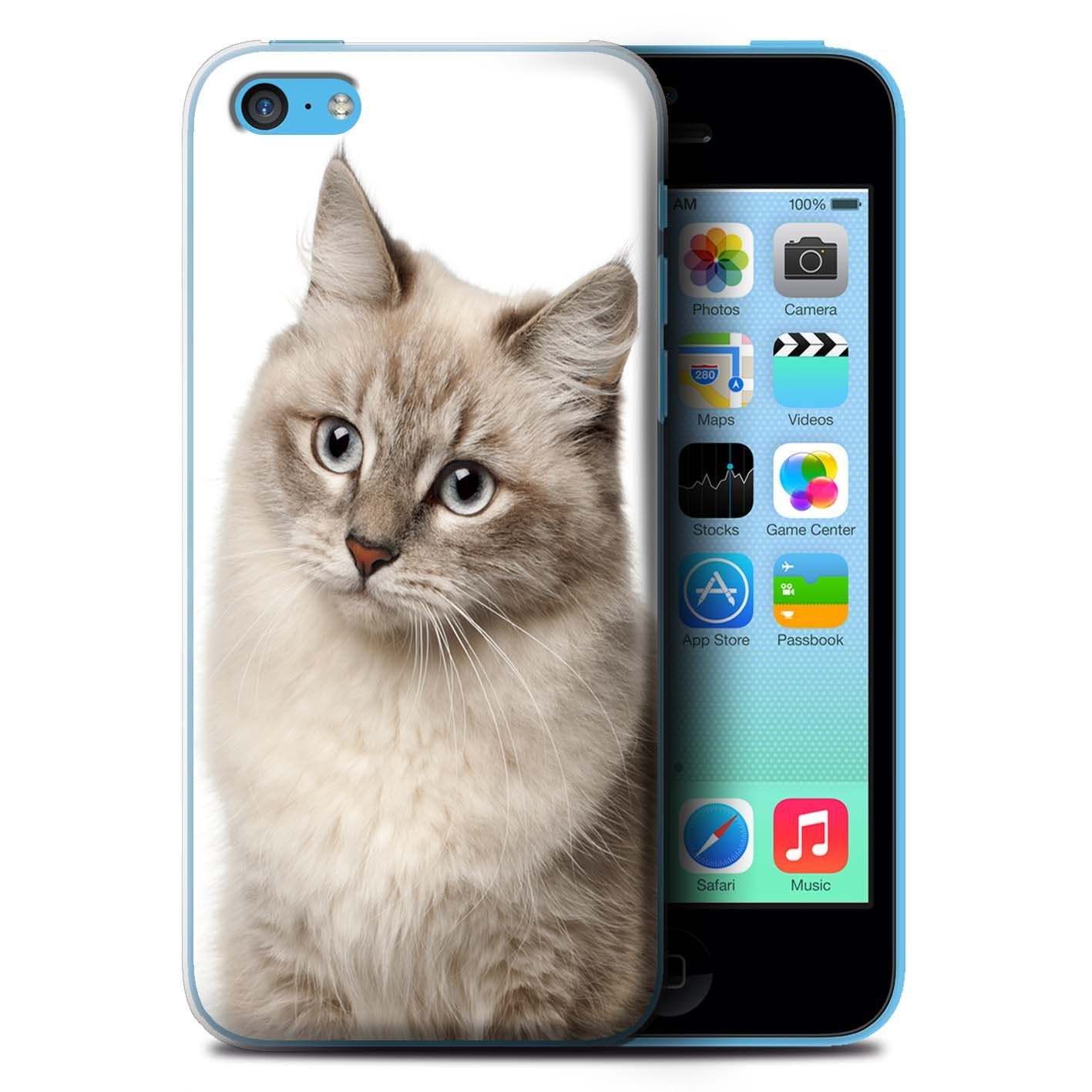 Stuff4 Phone Case/Cover for Apple iPhone 5 °C/Siberian Design/Cat Species  Collection
