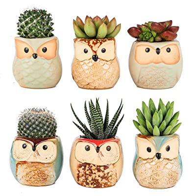 Owl Planter Pots for Succulents,Ceramic Cactus Flower Pots Pack of 6 Home Office Decor (Owl Pot Without Bamboo Tray): Garden & Outdoor
