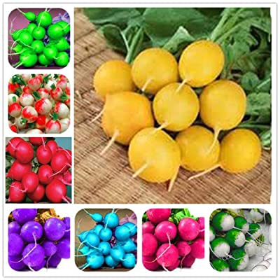 Weardear 50pcs Mixed Color Radish Seeds Plants Vegetable Juicy Planting for Home Garden Vegetables : Garden & Outdoor