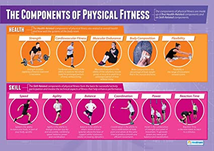 Health Related Fitness Components - FitnessRetro