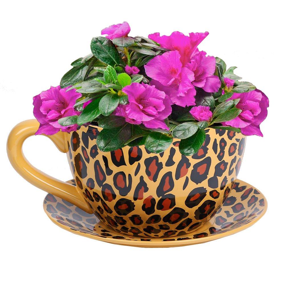 Botanico Garden Cup Pot & Saucer Plant Flower Planter - Leopard - 33cm