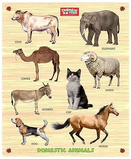domestic animals
