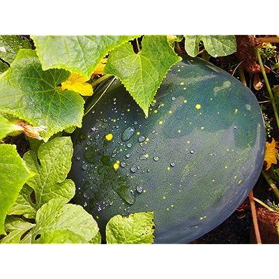 """""""Moon & Stars"""" Watermelon Seeds, 20+ Premium Heirloom Seeds, Fantastic Addition to Home Garden!, (Isla's Garden Seeds), Red Inside, Non GMO Organic, 90% Germination : Garden & Outdoor"""