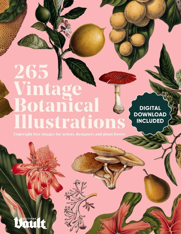 Vintage Botanical Illustration Copyright Free Designers product image