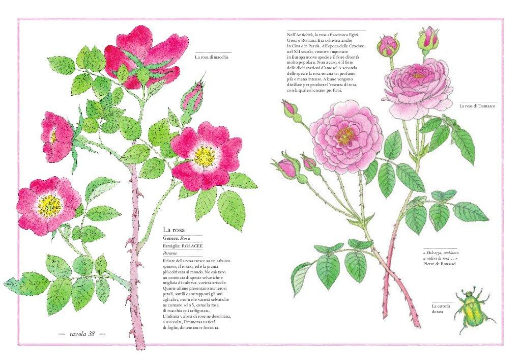 attività Montessori sul fiore