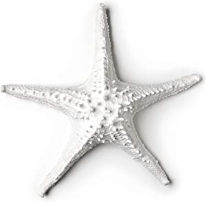 Abbott Collection 3D Starfish, White (Large)