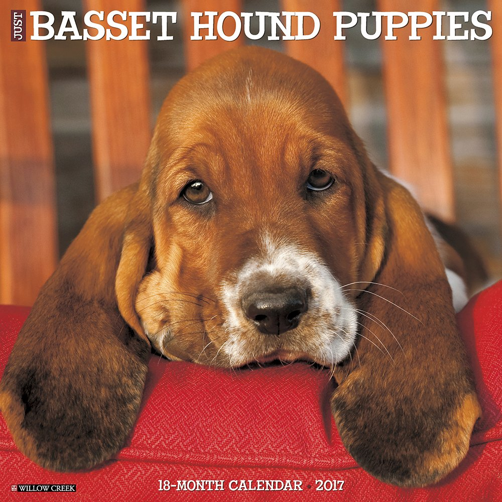 Just Basset Hound Puppies 2017 Wall Calendar (Dog Breed Calendars)