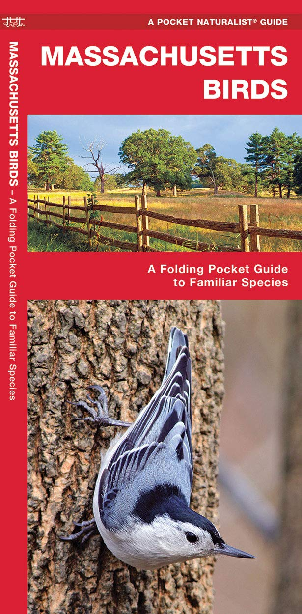 Massachusetts Birds A Folding Pocket Guide To Familiar Species