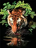 Royal & Langnickel Paint by Number - Juego de pintura (27,9 x 38,1 cm), diseño de tigre bebiendo
