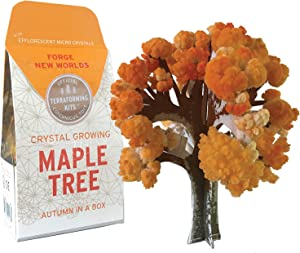 Copernicus Toys Crystal Growing Maple | Tree Official Terraformer kit | Grows in Hours