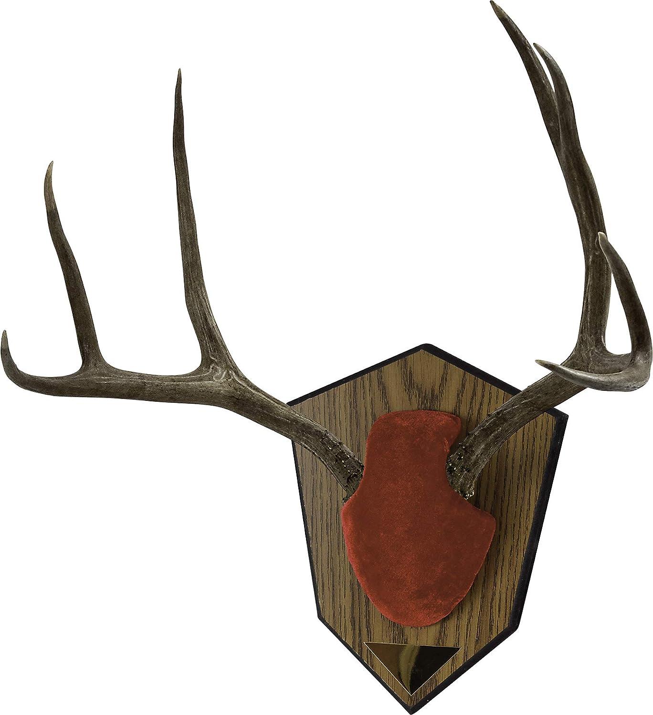 Allen CASES Mounting Kit Antler Red Skull Cover