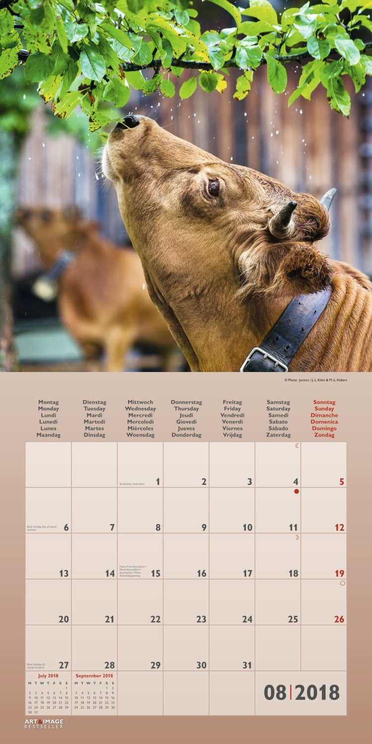 the hairy cow calendar 2018 evocative images of highland cattle on norfolk grazing marshes calvendo animals