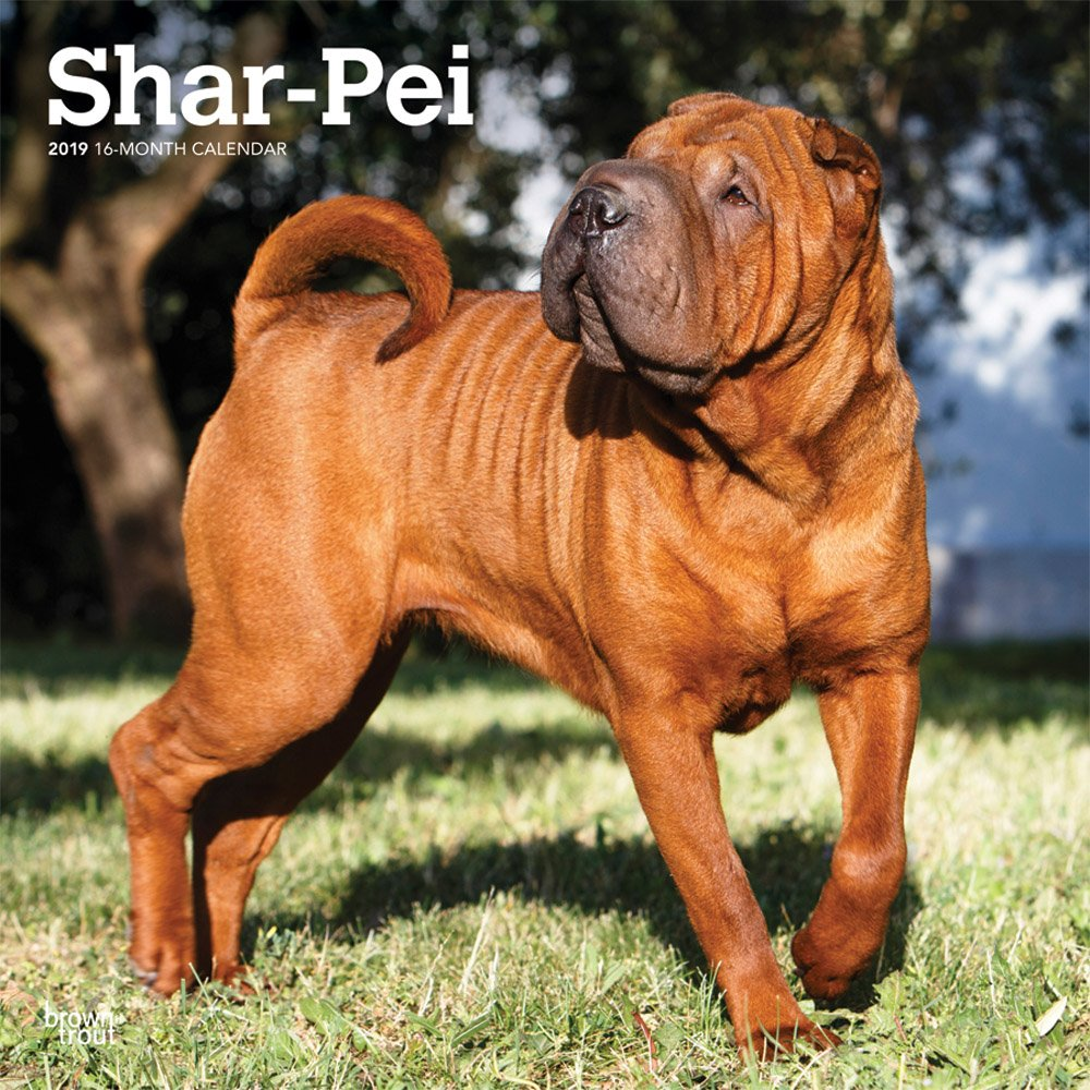 Read Online Shar Pei 2019 12 x 12 Inch Monthly Square Wall Calendar, Animals Dog Breeds (Multilingual Edition) ebook