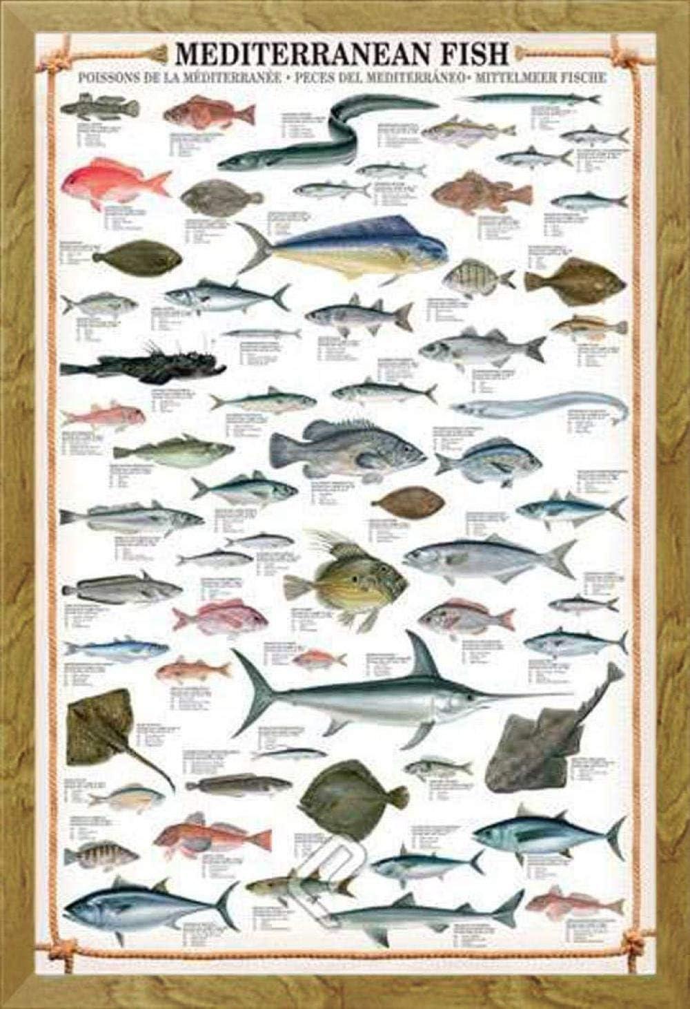 HAIBAOSMS póster Peces mediterráneos educativos Peces mediterráneos educación aprendizaje cartel impresión