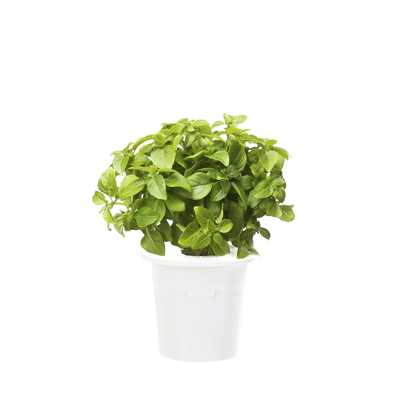 Basil Refill 3er Pack für Click & Grow Smart Herb Garden