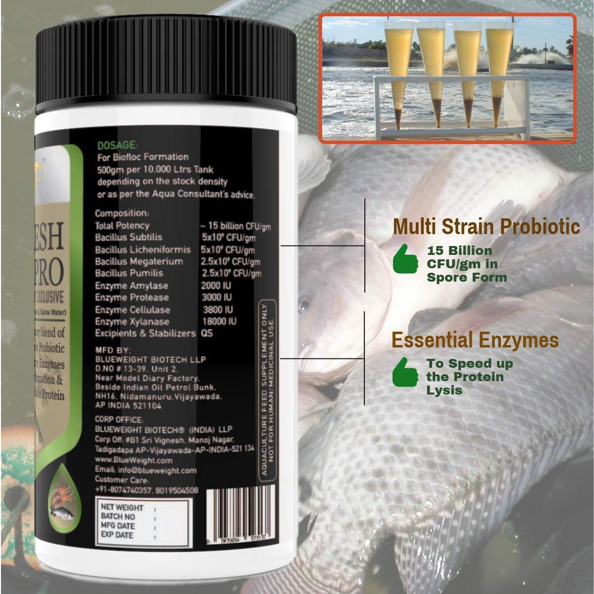 BLUEWEIGHT Everfresh Pro Aqua Probiotics, Multi Strain Probiotic 15b  CFU/gm, 500 G