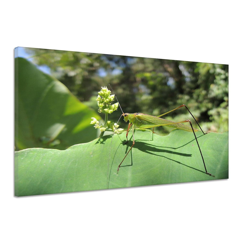Heuschrecke Grün Blatt Insekt Nahaufnahme Leinwand Poster Druck Bild uu1805 180x120