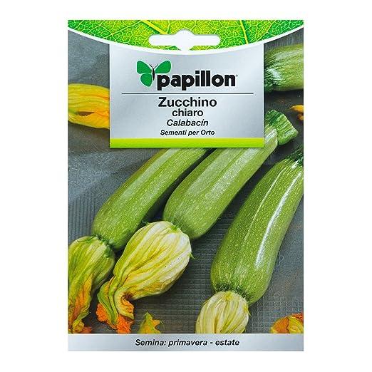 Semillas Calabacin Claro (5 Gramos): Amazon.es: Jardín