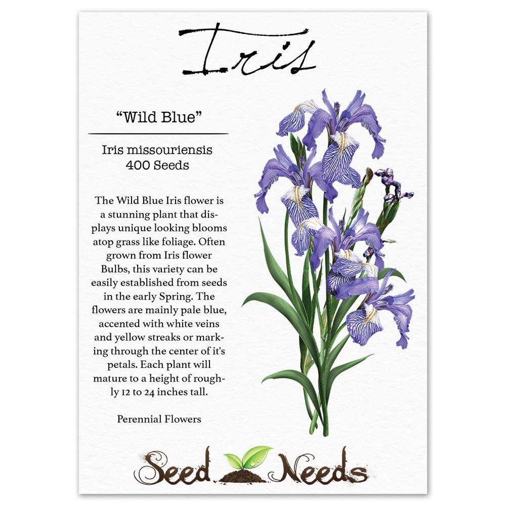 Amazon Package Of 400 Seeds Wild Blue Iris Iris
