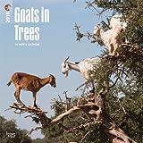 Goats in Trees - Ziegen auf Bäumen 2018 - 18-Monatskalender: Original BrownTrout-Kalender [Mehrsprachig] [Kalender] (Wall-Kalender)