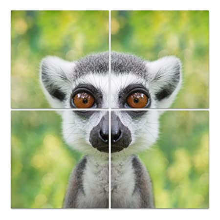 Dekoglas Glasbild Lemur Gesicht Acrylglas Bild Kuche Wandbild