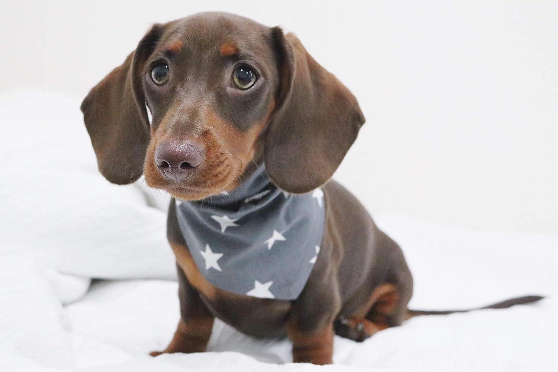 Grau Pet Pooch Boutique Halstuch f/ür Hunde Gr/ö/ße XS