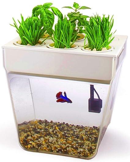 Amazon Com Aquafarm Fish Tank Shelf Cleaning Goldfish Betta Small
