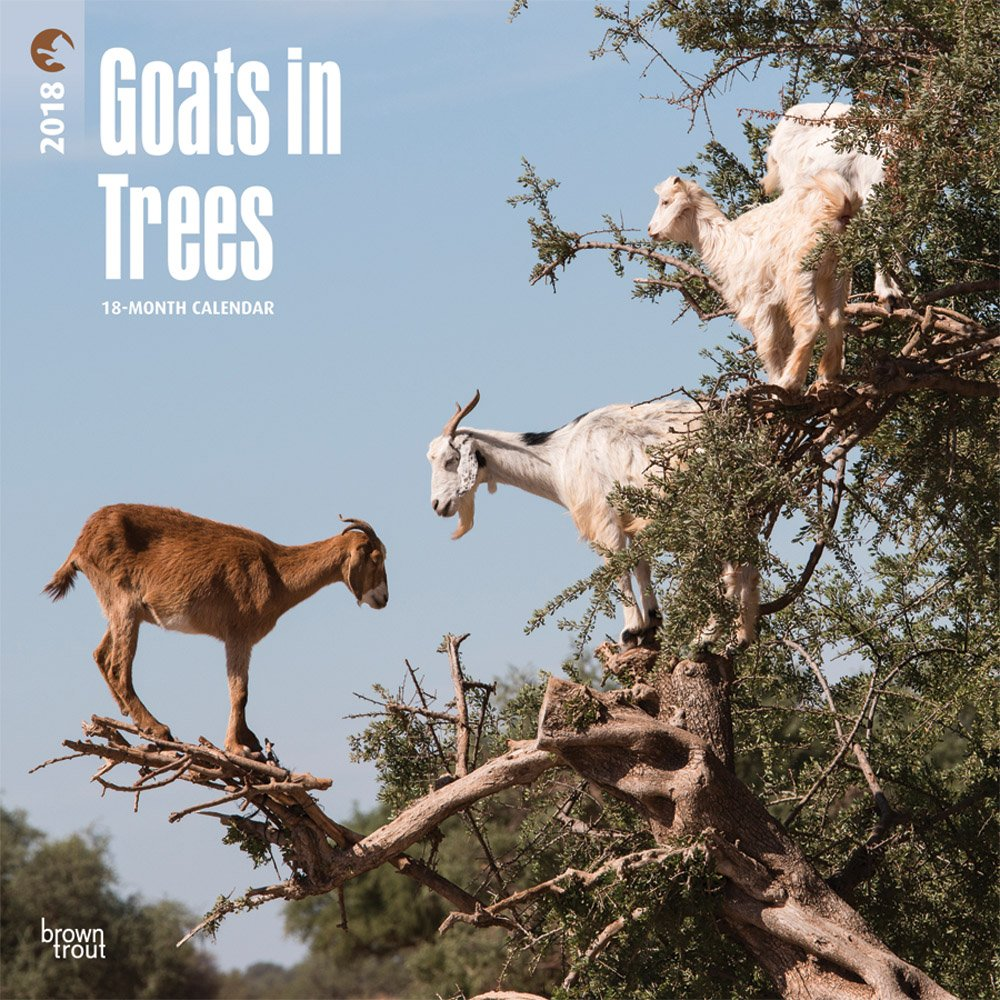 Two Old Goats Amazon Wwwtopsimagescom