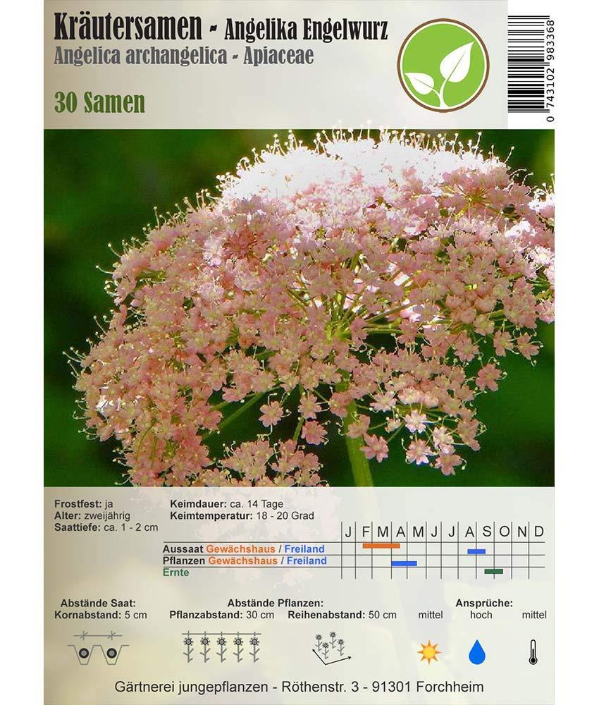 Semillas de hierbas - Angelika - Angelica archangelica L. 30 ...