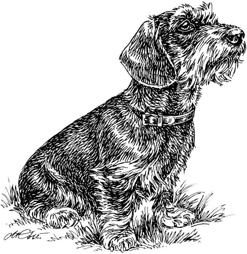 Schecker Autoaufkleber Hundeaufkleber Ideal Für Helle Autos Rauhhaardackel Sitzend Haustier