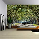 Wall26 - Long Pathway in an Arch Tree Covered Forest - Wall Mural, Removable Sticker, Home Decor - 100x144 inches