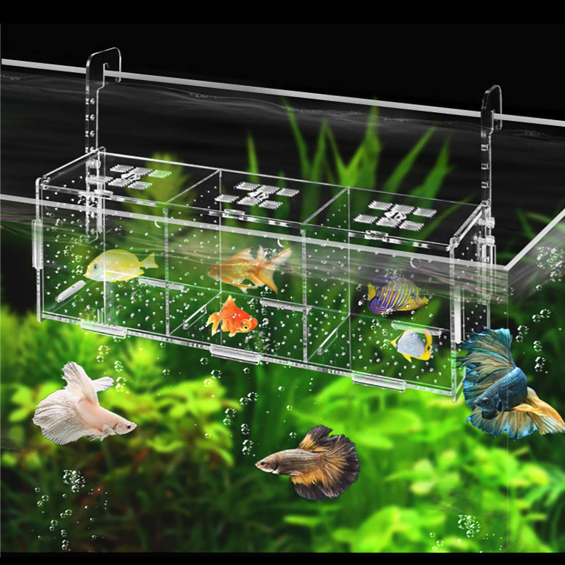 Acrylic Fish Tank Isolation Box - Aquarium Fishes Breeding Hatchery Box, Separation Tank(Hanging Type/Four Grids,401521cm) by YaToy (Image #6)