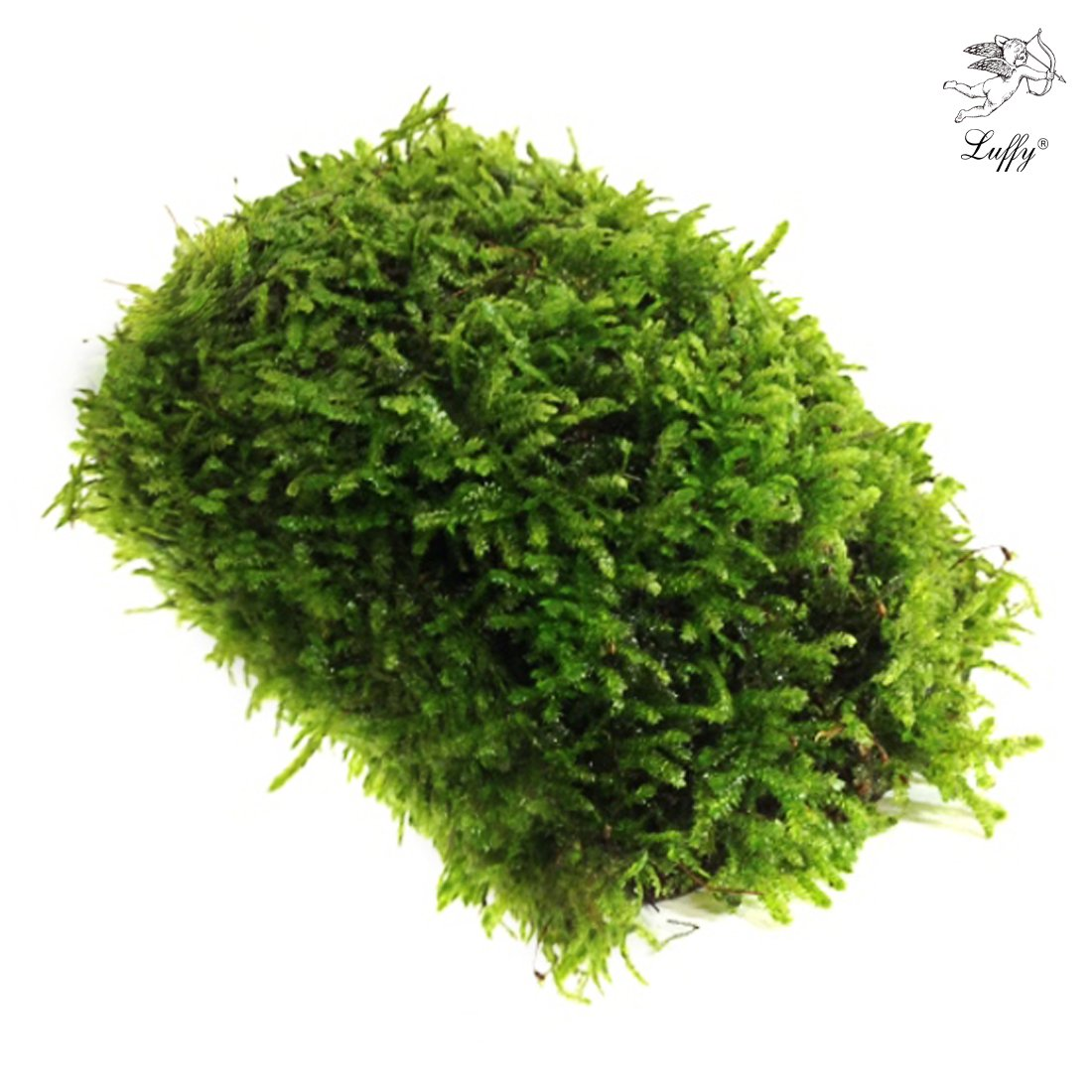 Luffy Coco Mini Moss - Builds a Beautiful and Natural Aquascape: Easy Care, Hardy and Long Lasting Plant: Filters and Provides Aquariums with Oxygen (Moss Stick)