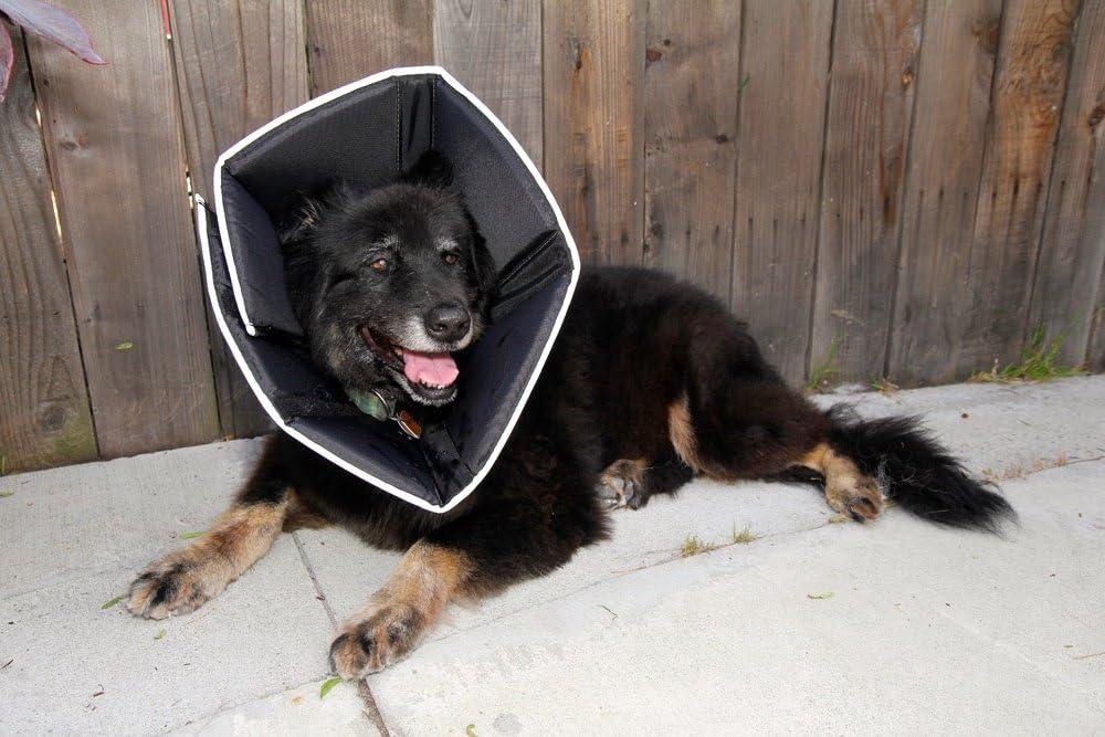 Mejores collares isabelinos para perros [year] (Guía) 2