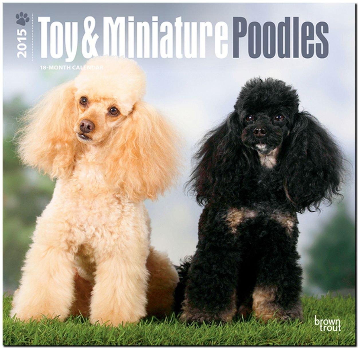 Toy and Miniature Poodles 2015 - Toypudel und Zwergpudel: Original BrownTrout-Kalender [Mehrsprachig] [Kalender]