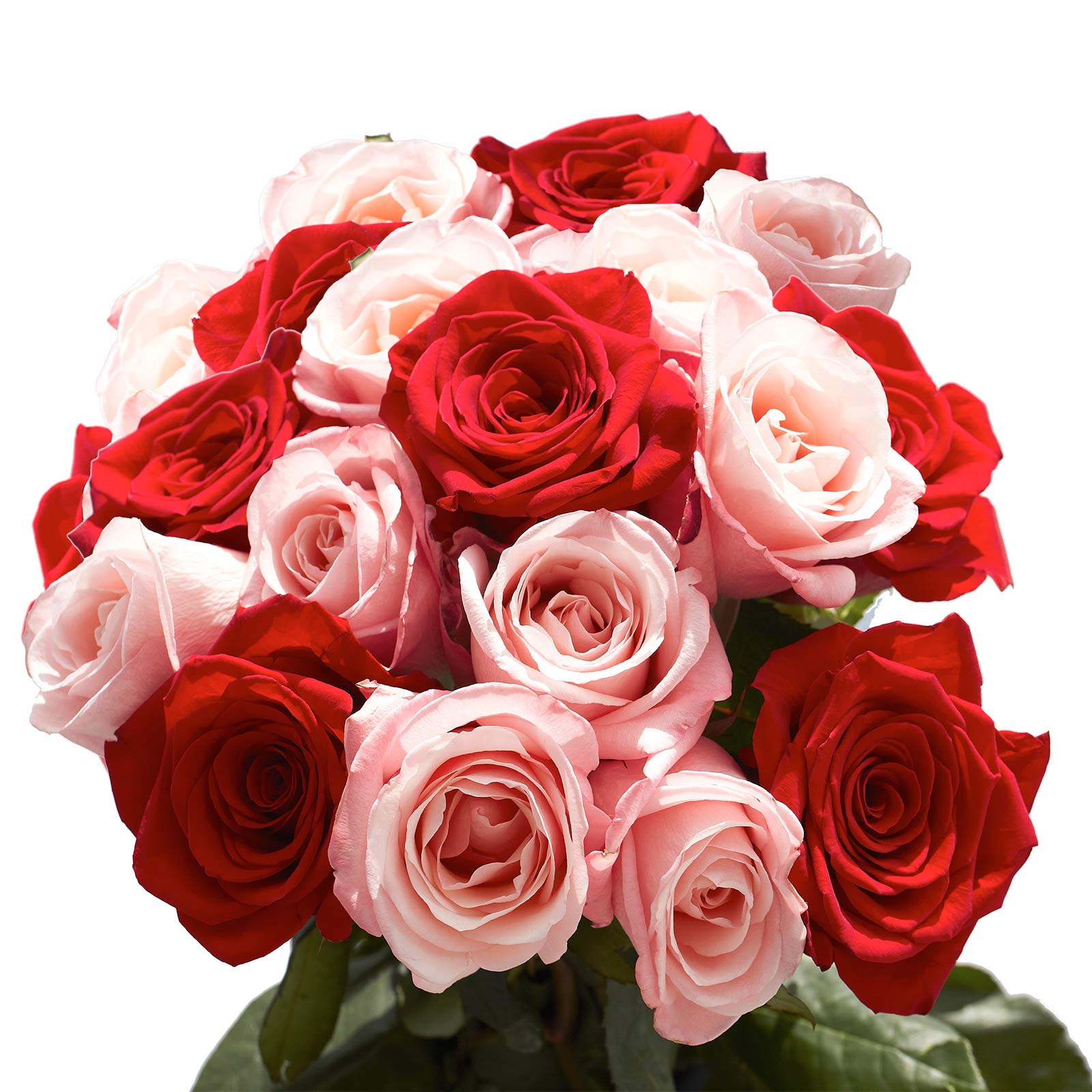 GlobalRose 50 Roses - 25 Red and 25 Pink - Express Flower Delivery by GlobalRose